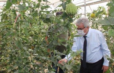 Bilgi Ürüne Dönüşmeye Başladı, Konya Gıda Ve Tarım Üniversitesi'nden Tohumda Dev Atılım
