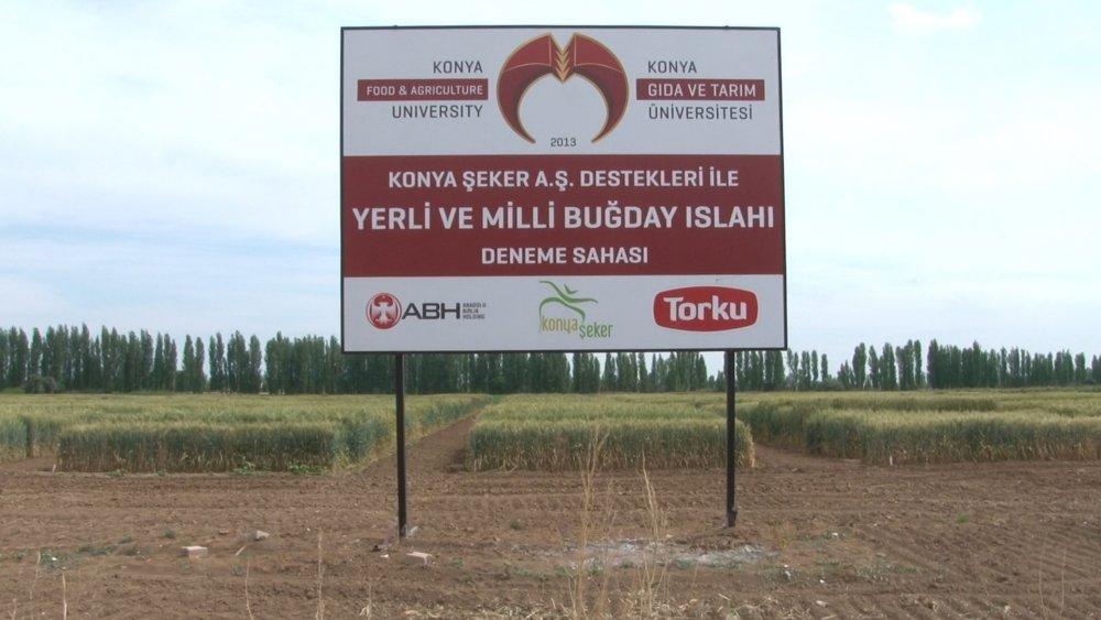 Üniversitemiz <i><strong>Yerli ve Milli</strong></i> Buğday Islahında Sona Geldi